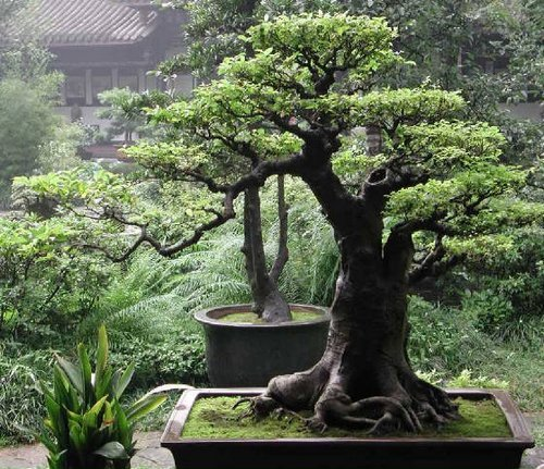 Backyard Bonsai Trees : Japanese Gardening The Magic of Japanese Gardens  wwwcoolgardenme