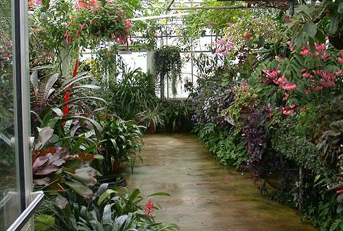 greenhouse-tropical