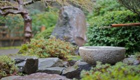 Garden Project: A Rock Garden Plants