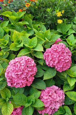Garden plants shrubs for Easy care garden shrubs