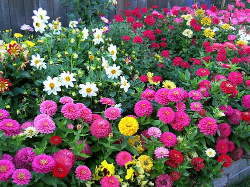 Perfect flower bed ideas for Flower bed arrangements