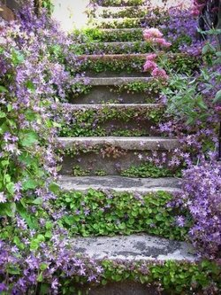 purple-stairs