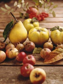fall-fruits