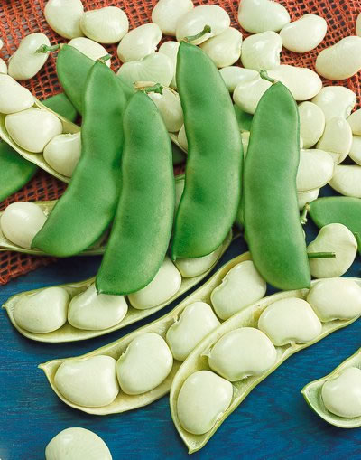 How to grow lima beans for How to cook fresh lima beans from garden