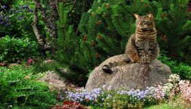 Pet Friendly, Green Garden Designs
