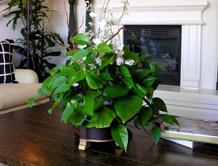 Indoor House Plants – Winter Care