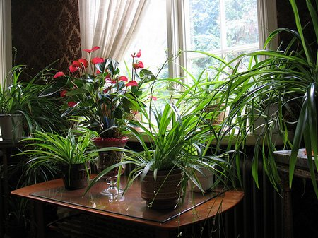 indoor-plants1