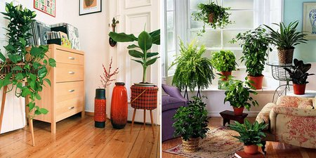 indoor-plants2