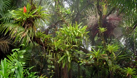 rainforest bromeliad