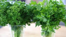 Parsley – Planting & Growing