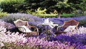 Planting Lavender For A Beautiful Spring Garden