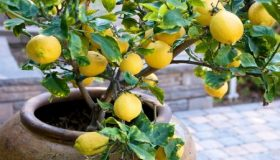 Garden Designing With Fruit Containers