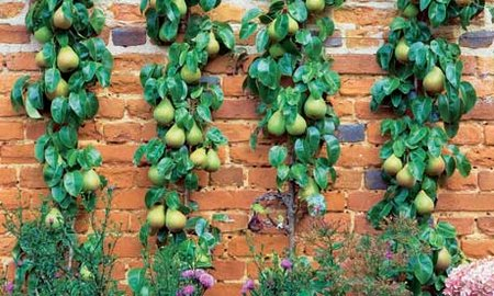 Garden designing with fruit containers - Fruit trees in small spaces decoration ...