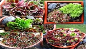 How To Propagate Succulent Plants