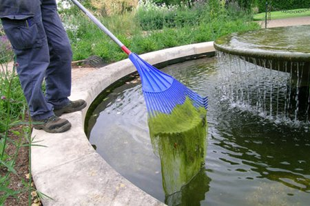 Mid fall gardening tasks for Garden pond cleaning