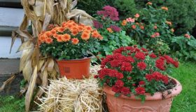 Planning For Your Garden In October