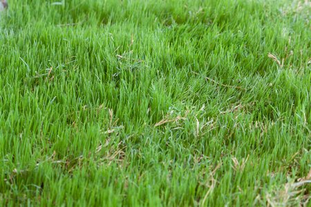 how to change ph of lawn