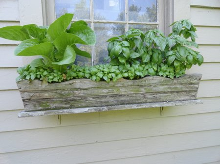 window-box-garden3