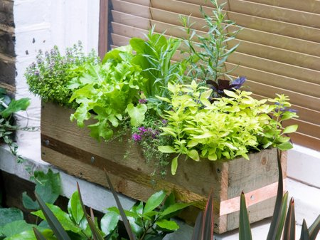 window-box-herbs