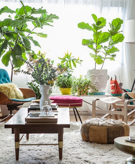 Plants Inside Rooms: In-House Plants: Planting Tips