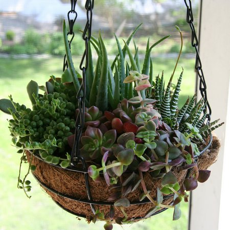 hanging-basket-succulents