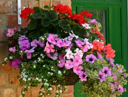 hanging-basket1