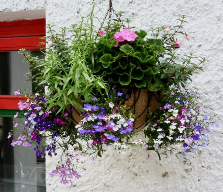 hanging-basket3