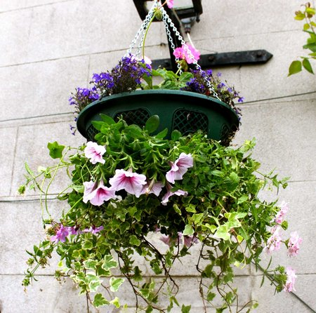 hanging-basket6