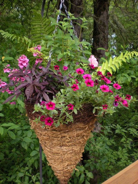 hanging-basket9