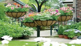Growing Plants In Hanging Baskets
