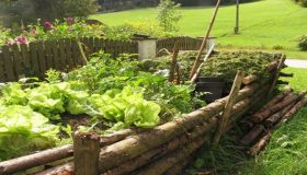 Organic Garden – How To Avoid Pesticides?
