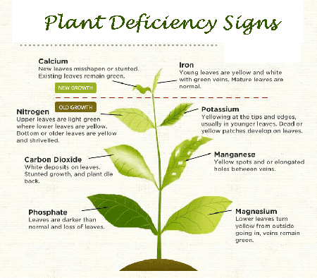 plant-feeding-deficiency