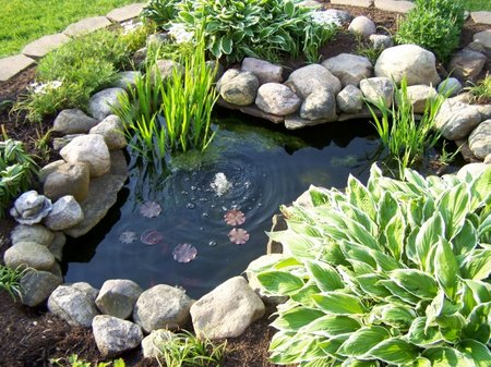How To Choose Your Pond Color