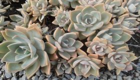 Succulent Plants: Growth And Care