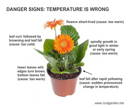 damaged-plant-temperature
