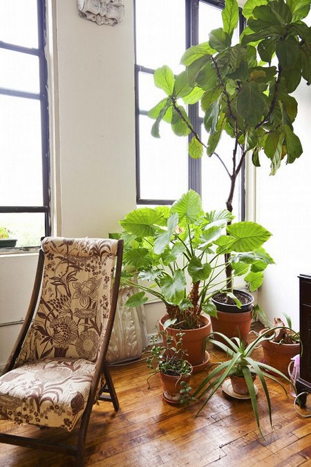 Indoor Plants Temperature Guide | www.coolgarden.me