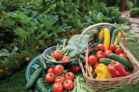 Organic Fruit And Vegetable Gardens wwwcoolgardenme