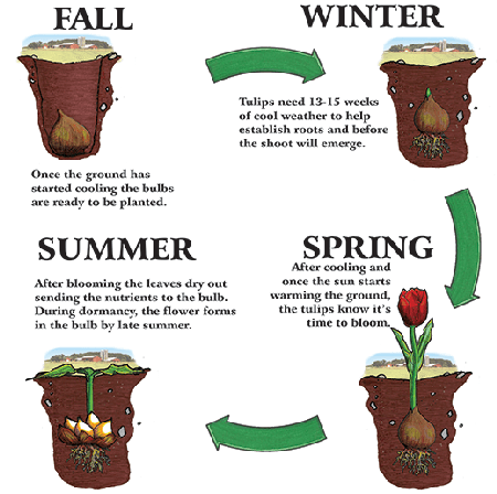 fall planting list  .coolgarden, Natural flower