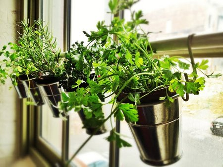 herb-window-garden