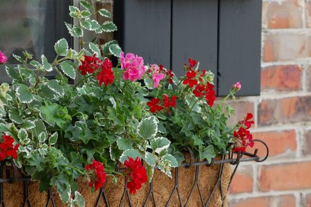 window-box
