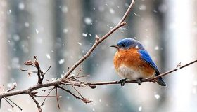 How To Help Wild Birds During The Winter?