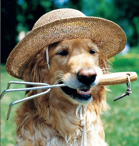 dog-with-garden-hat