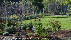 Planning For Early Spring Garden