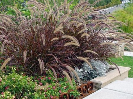 New gardening trends for Ornamental grasses for small spaces