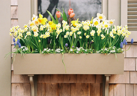 spring-window-box