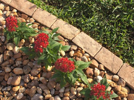 Edging Plays A Useful Role In A Variety Of Important Garden Situations:  Where A Hard Surface Like A Path Meets A Lawn Of Flower Bed, And Where A  Border ...