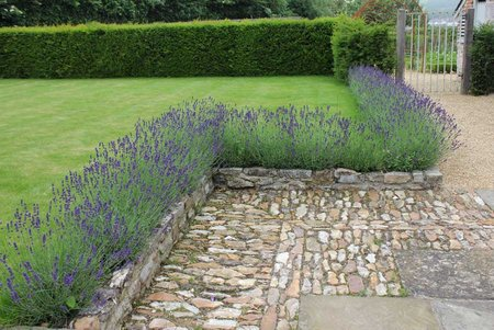 lavender-edging