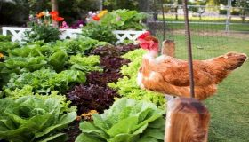Protect Your Vegetable Garden From The Harmful Insects