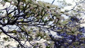 Flowering Trees For Garden Shade And Beauty
