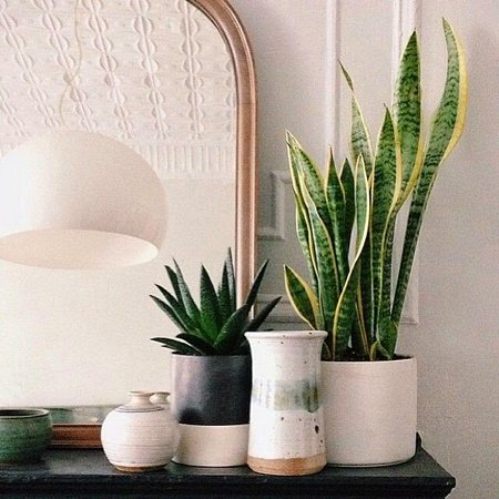 Shade Tolerant Plants For Indoors